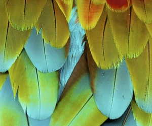 colors and feathers image