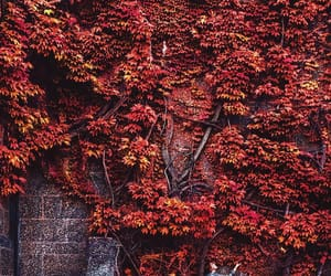 autumn, September, and vibes image