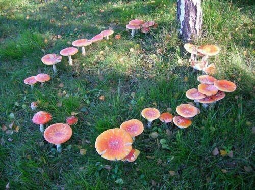 fairy, mushroom, and nature image