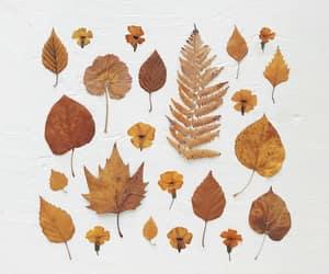 art, autumn, and autumn colors image