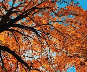 aesthetic, autumn, and trees image