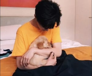chinese, idol, and puppies image