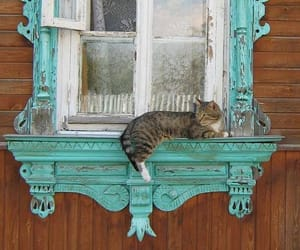 beauty, cat, and old image