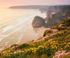 flowers, sea, and cliff image