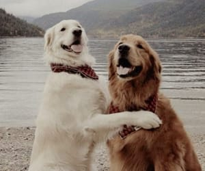 couple, dog, and friend image