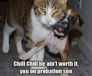 funny animals cats dogs image