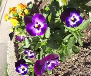 flower, flowers, and purple image