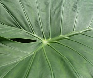 green, nature, and leaf image