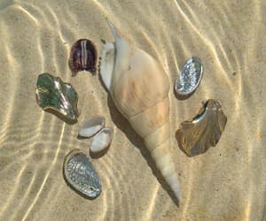 water, beach, and shell image