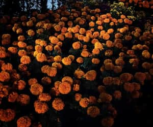 day of dead, flor, and flowers image