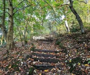 leaves, magic, and autum image