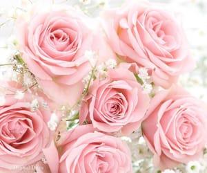 feminine, flowers, and pink image