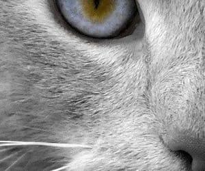 cat, animal, and eye image