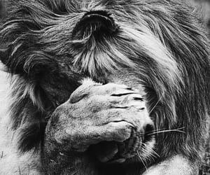 b&w, deep, and lion image