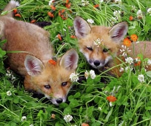 fox and cottage core image