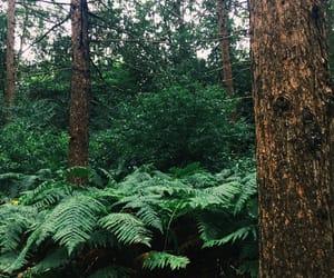 adventure, nature, and walk image