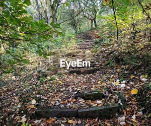 enchanted, autum, and photography image