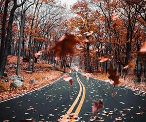autumn, fall, and cold image