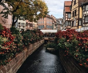 travel, theme, and flowers image