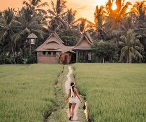 architecture design, palms, and beautiful landscape image