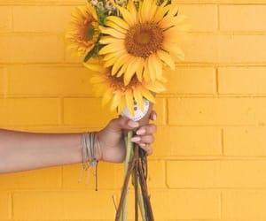 yellow, flowers, and sunflower image