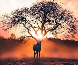 arbol, awesome, and deer image