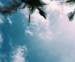 palm trees, sky, and beach image