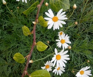 autumn, flower, and daisies image