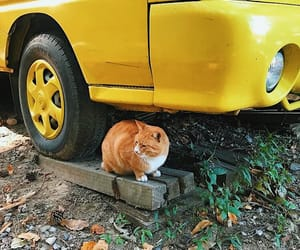 animal, car, and cat image
