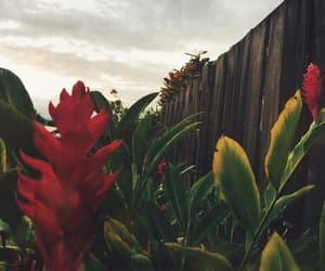 flower, Oahu, and garden image