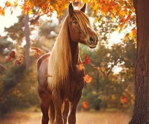 autumn and happe image