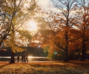 autumn, evening, and fall image