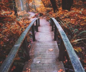 automne, chemin, and fall image