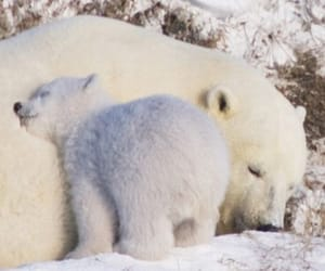 animals, cub, and cute image