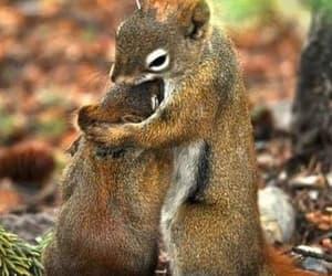 squirrel and animals image