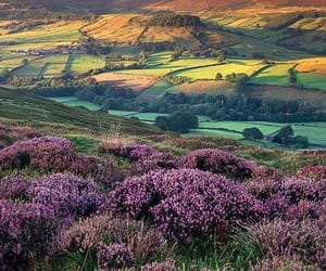 england, nature, and flowers image