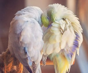 bird, parrot, and love image