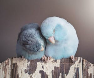 bird, cute, and love image