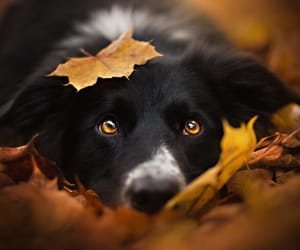 autumn and dog image