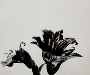 aesthetic, flowers, and black image