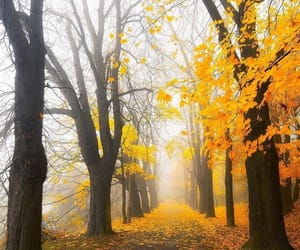 arbres, color, and nature image