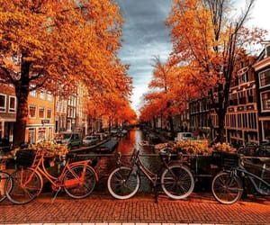 arbres, automne, and autumn image