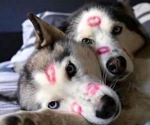 kiss and dog image