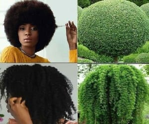 Afro, hair, and beautiful image