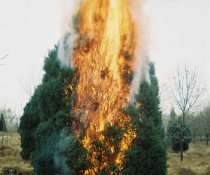 fire, trees, and wildfire image