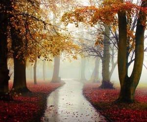 autumn, camino, and niebla image