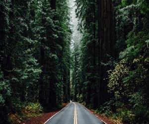 forest, road, and wallpaper image