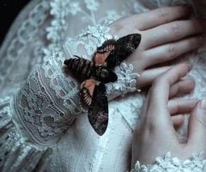 butterfly, fantasy, and lace image