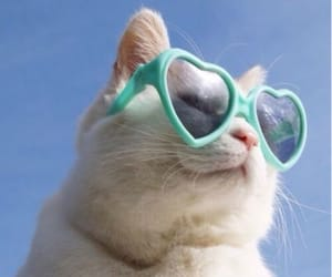 cat, glasses, and shades image