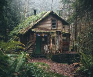cabins, forest, and naturaleza image